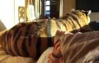 Im Bett mit einem Tiger? Warum nicht?
