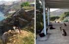Este refúgio para gatos em uma esplêndida ilha grega busca um zelador que cuide dos seus 55 inquilinos