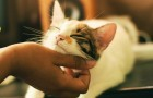 Le fusa dei gatti ci aiutano ad alleviare dolori fisici e mentali: ecco perché