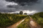 L'odore della pioggia non solo è romantico, ma è il prodotto di una reazione chimica incredibile