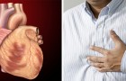Six months before a heart attack the body can send warning signs that should never be ignored!