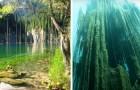 Der surreale Unterwasserwald, in dem die Bäume