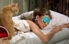 Sentir-se muito cansado para levantar da cama pode ser sinal de inteligência: pode colocar seu celular em modalidade soneca sem culpa