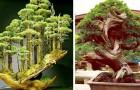Cet artiste japonais crée des bonsaïs qui ressemblent à de véritables forêts miniatures