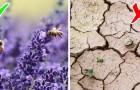 Impariamo a rispettare le api: ecco perché questi insetti sono fondamentali per il nostro pianeta
