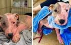 Den här hunden begravdes levande på en strand, men som tur var kom räddningen i tid