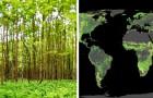 Piantare un miliardo di ettari di alberi potrebbe