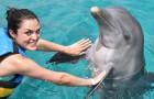 Deze vereniging is op zoek naar vrijwilligers om naar Kroatië te reizen en de dolfijnen te redden