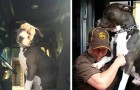 Een pitbull die verweesd achterbleef nadat zijn baasje is verdwenen wordt geadopteerd door een koerier