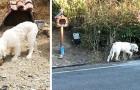 Il padrone scompare in un incidente, dopo due anni il suo cane è ancora lì ad aspettarlo