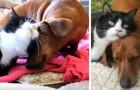 Ils ont été abandonnés ensemble : depuis lors, le teckel s'occupe de la petite chatte paralysée