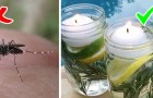 How to make a do-it-yourself natural repellent against flies and mosquitoes to enjoy a summer without insect bites