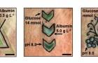 Hier sind die Tattoos, die ihre Farbe ändern, je nach den Werten von Glukose, Albumin oder pH-Wert des Blutes