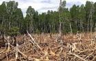 Wissenschaftler bestätigen, dass die effektivste Lösung gegen den Klimawandel heute darin besteht, Bäume zu pflanzen. So viele brauchen wir