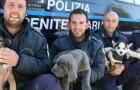Asti: la scuola per cani poliziotto sceglie di arruolare solo gli animali dei canili