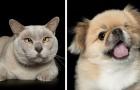 Una fotografa cattura la bellezza degli animali
