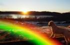 Où vont nos animaux domestiques quand ils nous quittent ? Voici la légende du Pont de l'Arc-en-ciel