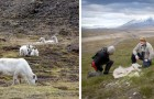 Het Noordpoolgebied: meer dan 200 rendieren en herten stierven van de honger als gevolg van de opwarming van de aarde