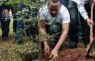 In Äthiopien wurden mehr als 350 Millionen Bäume gepflanzt, um den Klimawandel zu bekämpfen