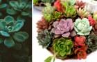 Le piante grasse trasmettono energia positiva: ecco perché dovreste averne in casa