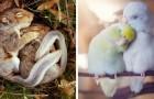 18 verliefde dierenstelletjes die zo uit een trouwalbum lijken te komen