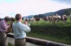 L'insolite réaction d'un troupeau de vaches devant un concert de jazz