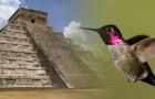 Selon les Mayas, le colibri est un animal magique : voici la fascinante légende