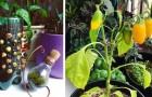 De 5 beste voedingsmiddelen die je absoluut op je balkon moet laten groeien