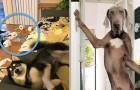 Uit deze 21 foto's wordt duidelijk waarom je door een hond een heel ander leven leidt