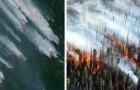 In Siberië is een gebied in rook opgegaan groter dan Portugal. De regering heeft (bijna) niets gedaan
