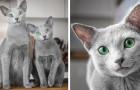 Questi bellissimi gatti