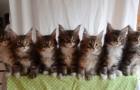 Voici le résultat quand on teste les réflexes de 7 chats ensemble