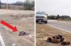 Een man met een hart van steen laat aan de kant van de weg acht pups achter, maar voor hen, die het steenkoud hebben ligt een goede afloop in het verschiet