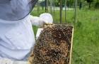 En 2019, la récolte de miel en Italie a été nulle, et la faute en revient au changement climatique