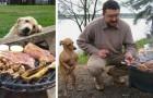 Cani che elemosinano cibo: 14 immagini esilaranti che i proprietari di cani capiranno all'istante