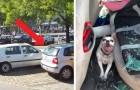 Dieser kleine Hund hat durch den Besitzer, der ihn im Auto in der Sonne zurückgelassen hat, bleibende Hirnschäden erlitten