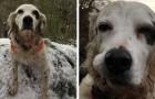 Die Geschichte von Pete: der tapfere Hund, der seine Familie vor einem Bären gerettet hat