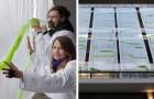 Dit zijn de hi-tech gordijnen die de lucht zuiveren dankzij het zonlicht