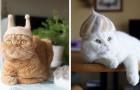 Questi divertenti gatti indossano dei copricapi 100% ricavati dalla loro pelliccia...in eccesso!