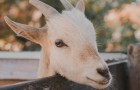 Video Video's van dieren Dieren