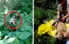 Deze wandelaars hebben een hond in het bos gevonden die al 11 dagen lang verdwaald was: de vreugde is enorm