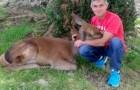 Het verhaal van Aladino Montes en het hert dat hem overtuigde om te stoppen met jagen op dieren