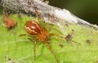 Klimaatverandering kan spinnen agressiever maken dan normaal: dit is waarom