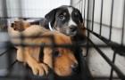 In Umbria, chi adotta un cane o un gatto da un rifugio riceve cure veterinarie GRATIS