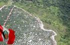 Stop alla deforestazione da olio di palma: ecco la svolta epocale del Perù