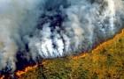 Der Amazonas steht in Flammen und der durch die Brände verursachte Rauch ist sogar aus dem Weltraum sichtbar