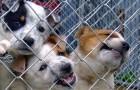 Quando adotti un cane non è la razza fare la differenza, ma l'amore che può darti
