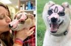 La storia di Taka, il cane scampato ad un incendio che ora regala gioia a chi ne ha bisogno
