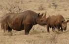 Kenia führt Todesstrafe gegen Wilderei ein, um gefährdete Tiere zu retten