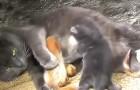 Esta gata adotou 4 esquilinhos órfãos e os trata como se fossem seus filhos